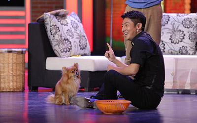 撒贝宁与狗狗亲密接触 欢乐中国人迎来萌犬灵灵